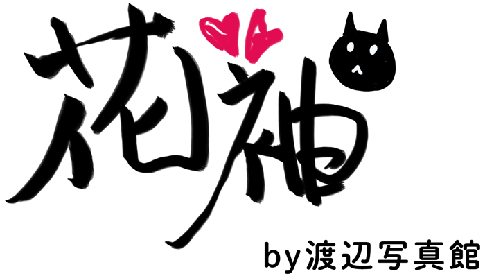 渡辺写真館のWEBカタログ